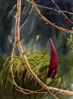 painting of spring_port_wine_magnolia